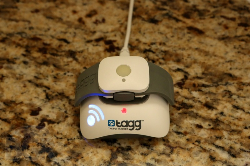 tagg-pet-tracker-2
