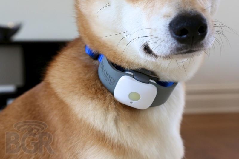 tagg-pet-tracker-8