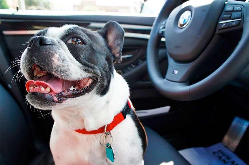 Awesome dog in car