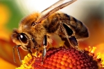 %name Yes, we want to replace bees with tiny flower loving robots by Authcom, Nova Scotia\s Internet and Computing Solutions Provider in Kentville, Annapolis Valley
