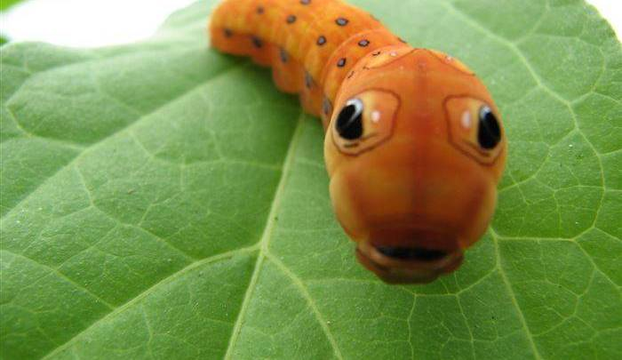 Cutest Animal Pictures Insects