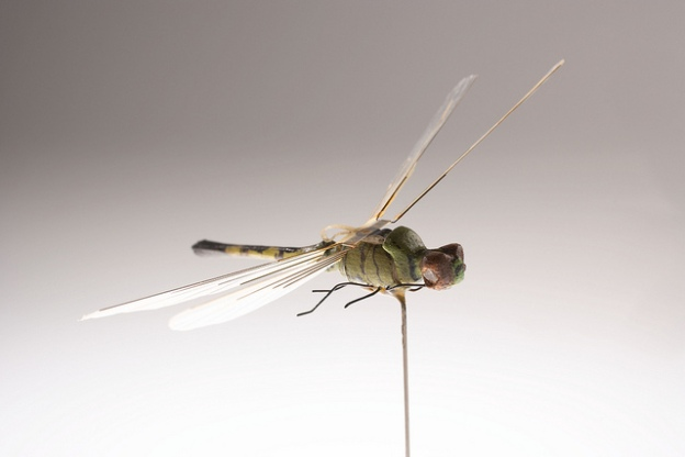 CIA Dragonfly