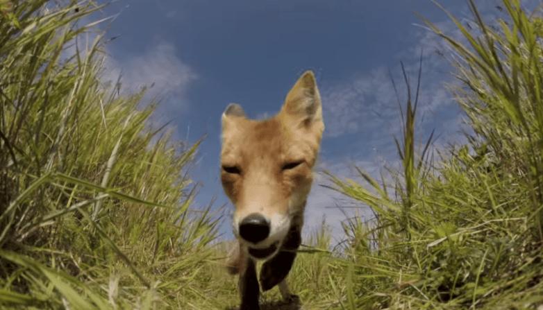 Best GoPro Videos Fox
