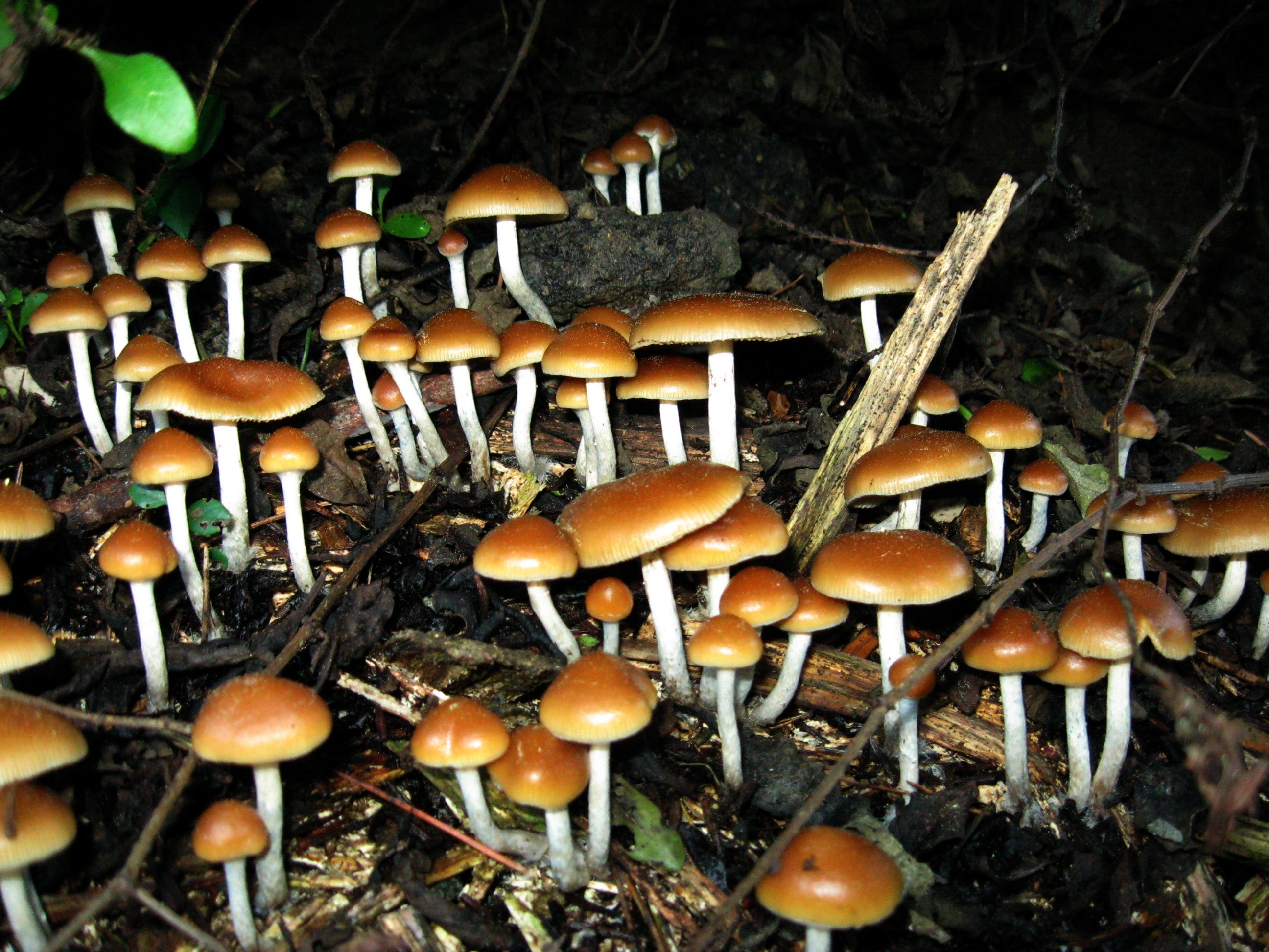 How to quit smoking: Magic mushrooms may help