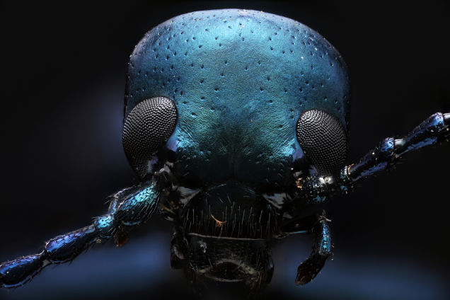 Macroscopic Macropod Incredible Photos