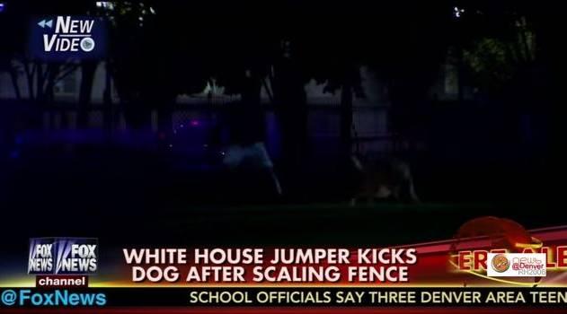 Dog Kicked White House Fence Jumper