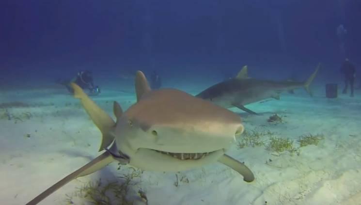 GoPro vs. Tiger Shark Video
