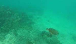 Best GoPro Videos Ocean Footage
