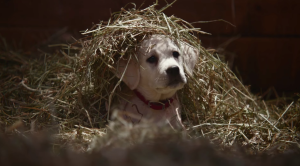 Most Popular Super Bowl XLIX Ads
