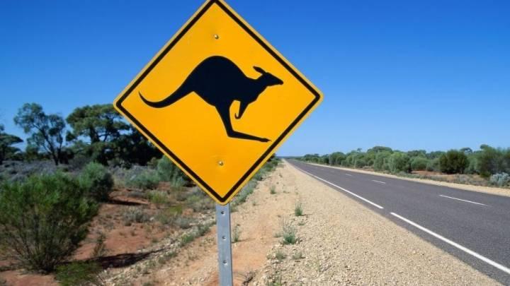 Australia Kangaroo Fight Video