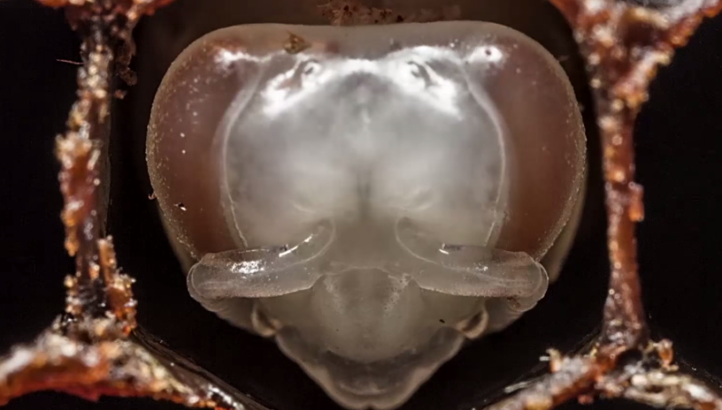 Bees Being Born Timelapse Video