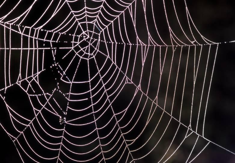 Spider Webs Carbon Nanotubes Experiment