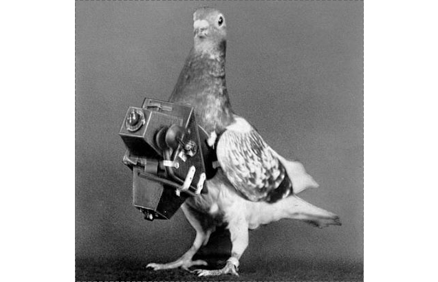 Pigeon Arrest Spy Charges India