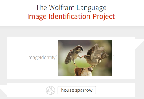 Wolfram Image Identification Project Website
