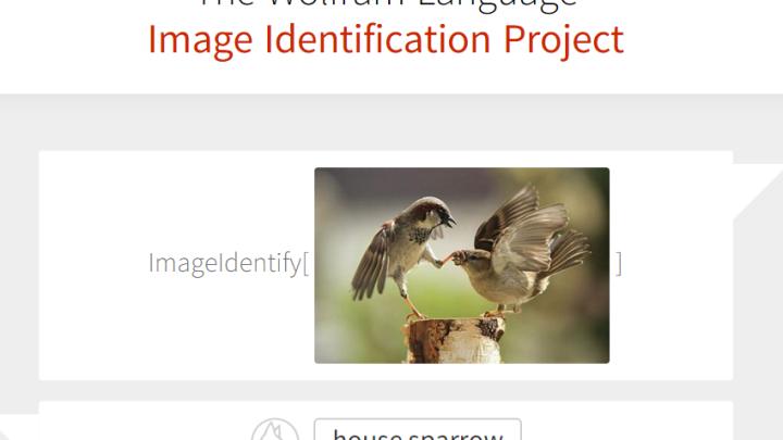 Wolfram Image Identification Project Website
