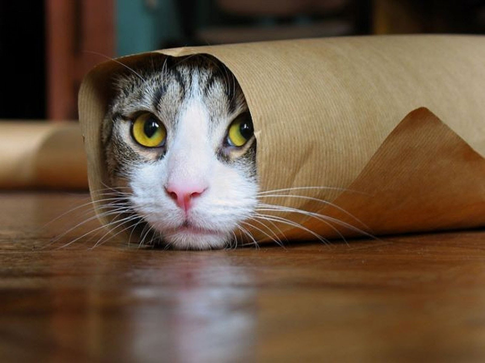 Funny Cat YouTube Videos Study