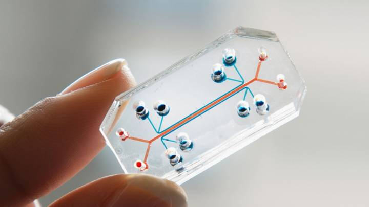 Organs-on-Chips Design Human Organs