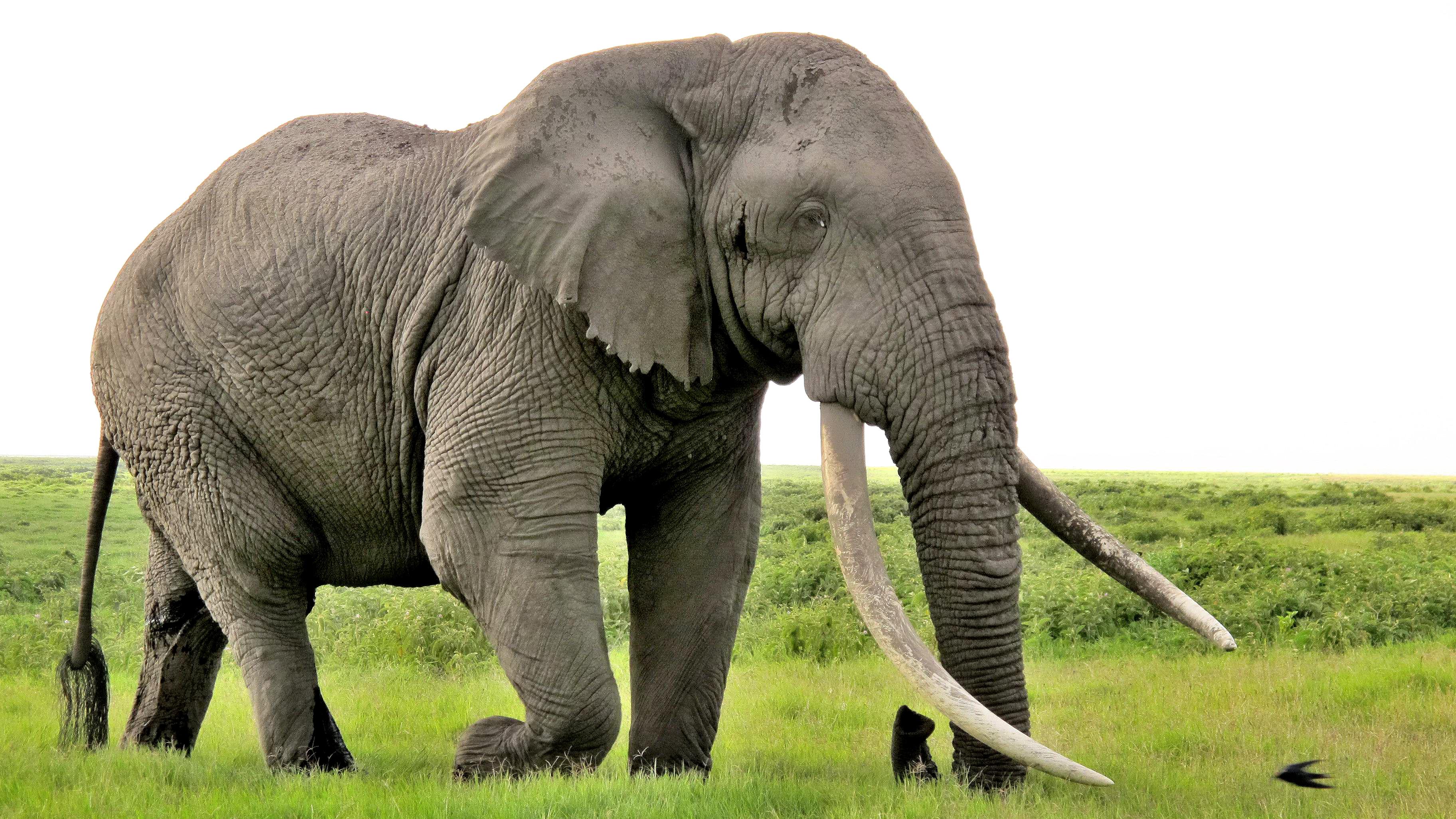 elephant tube