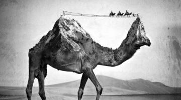 Sarah DeRemer Surreal Animal Photos