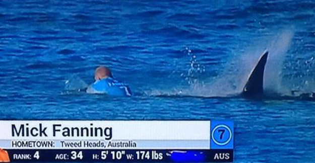 Surfer Fights Escapes Shark Attack Video