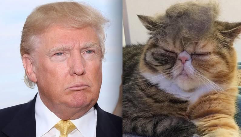 Trump Your Cat Best Photos