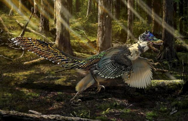 Velociraptor Dinosaur Species Fluffy Wings