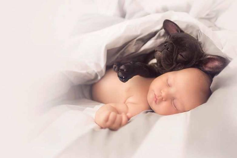 Baby French Bulldog Puppy Photos