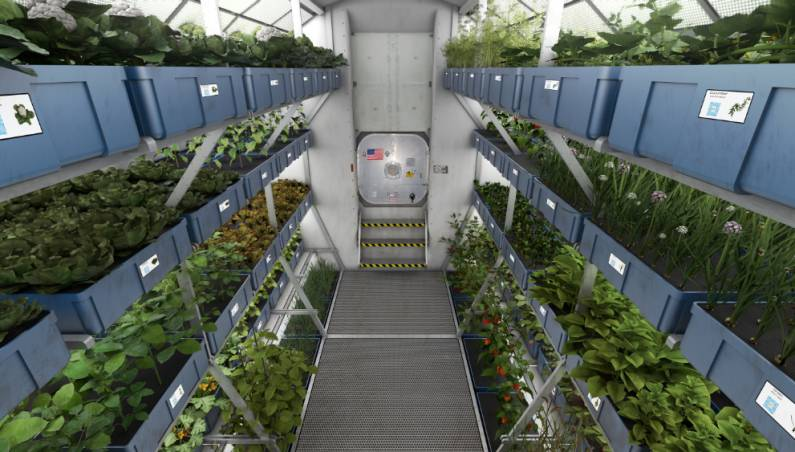 ISS Astronauts Space Lettuce Meal