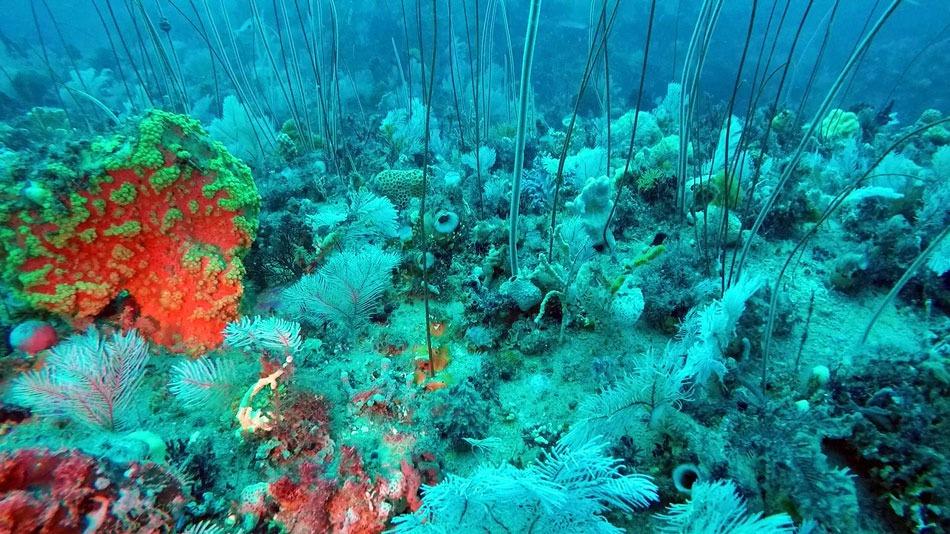 Great Barrier Reef Rival Australia