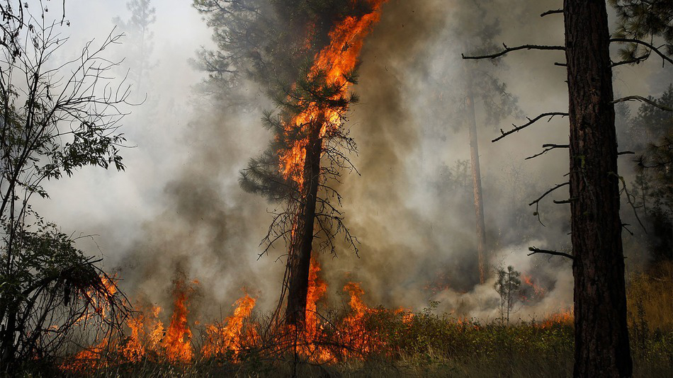 Washington Okanogan Complex Wildfire