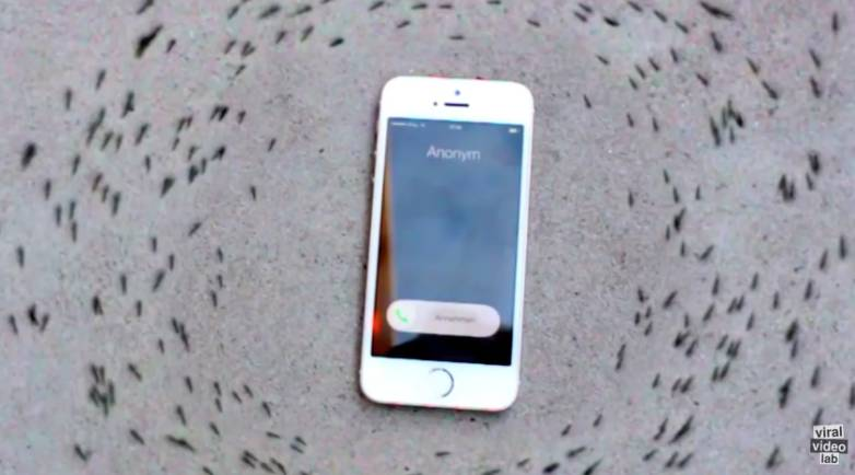 Viral Video iPhone Ringing Ants