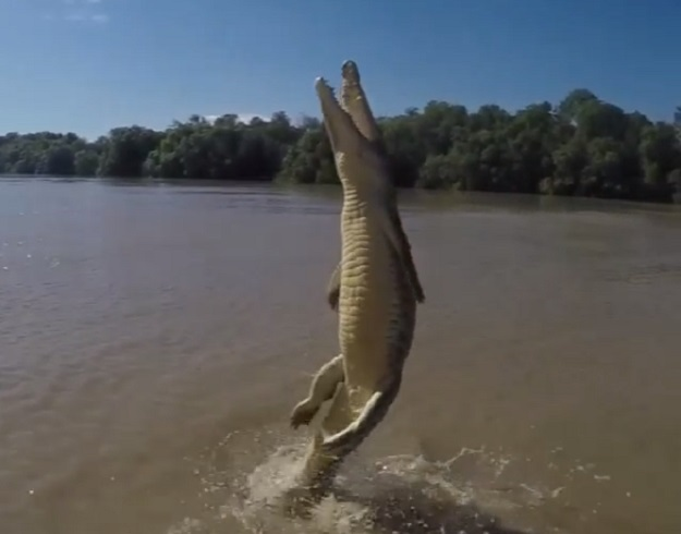 Terrifying Crocodile Jump