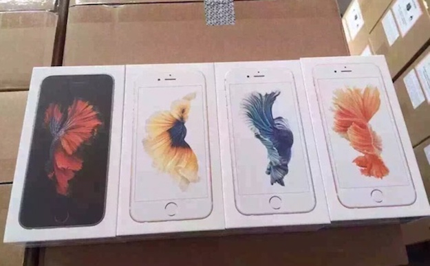 iPhone 6s Packaging Siamese Fighting Fish