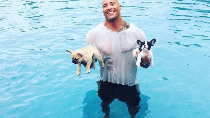 The Rock French Bulldog Puppies Pool Photo