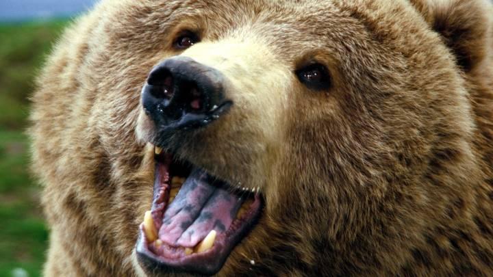 Woman Yells At Kayak Eating Bear Video