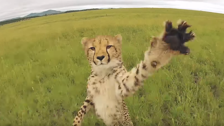 Drones Vs. Animals Best Videos
