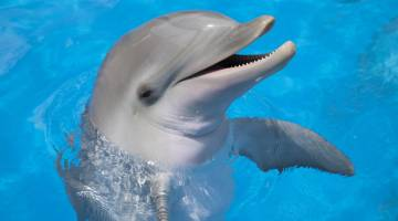 How Do Dolphins See Echolocation Images