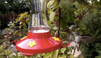 Nexus 6P Camera Hummingbird Video