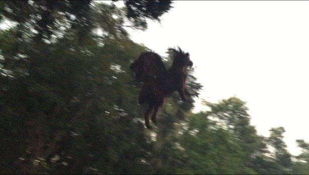 Jersey Devil Photo Halloween Hoax