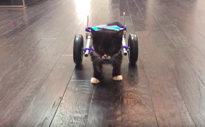 3D Printed Wheelchair Kitten Video