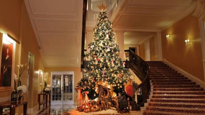 Christmas Trees Amazon