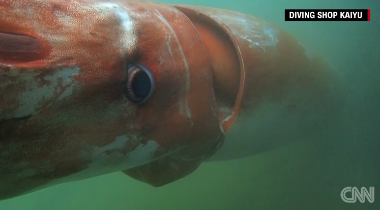 Giant Squid Video Japan Christmas