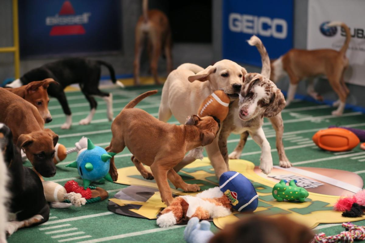 Puppy Bowl Virtual Reality