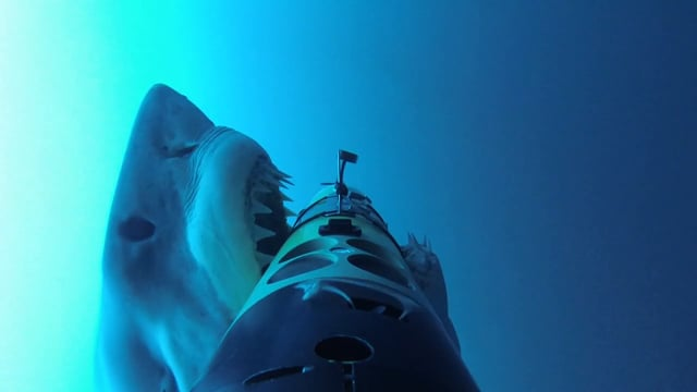 SharkCam Shark Behavior