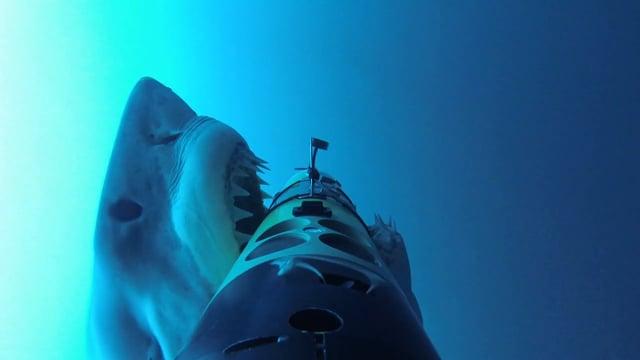 SharkCam Shark Behavior