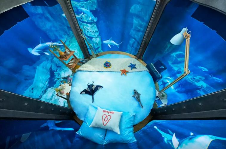 Airbnb Underwater Shark Bedroom