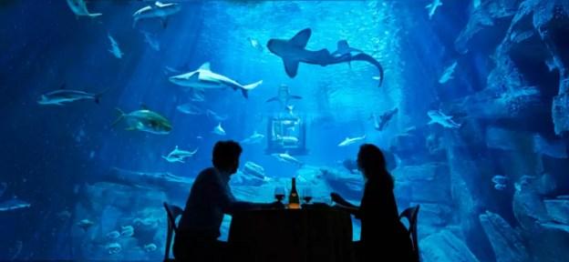 airbnb-shark-paris-aquarium-bedroom-4