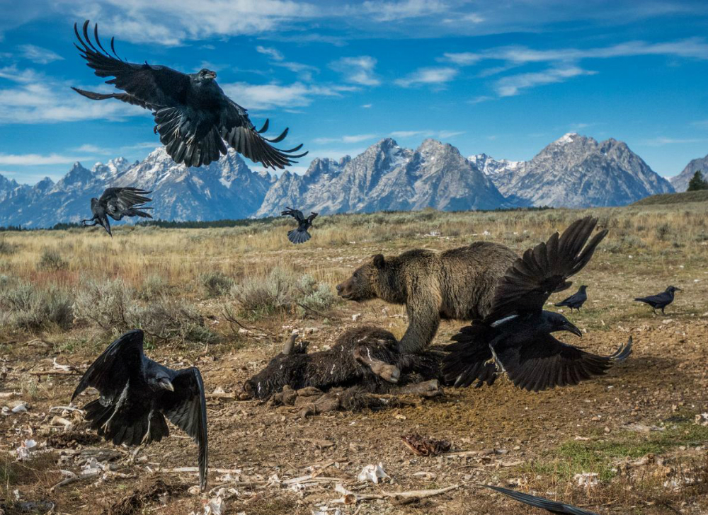 Grand Teton National Park 200,000 Photos