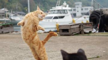 Cats Ballet Pictures Twitter