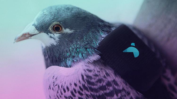 Plume Labs Pigeon Air Patrol